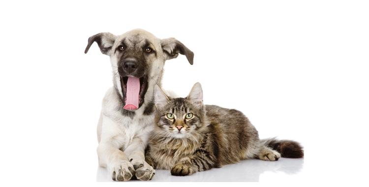 Caxorro e gato deitados